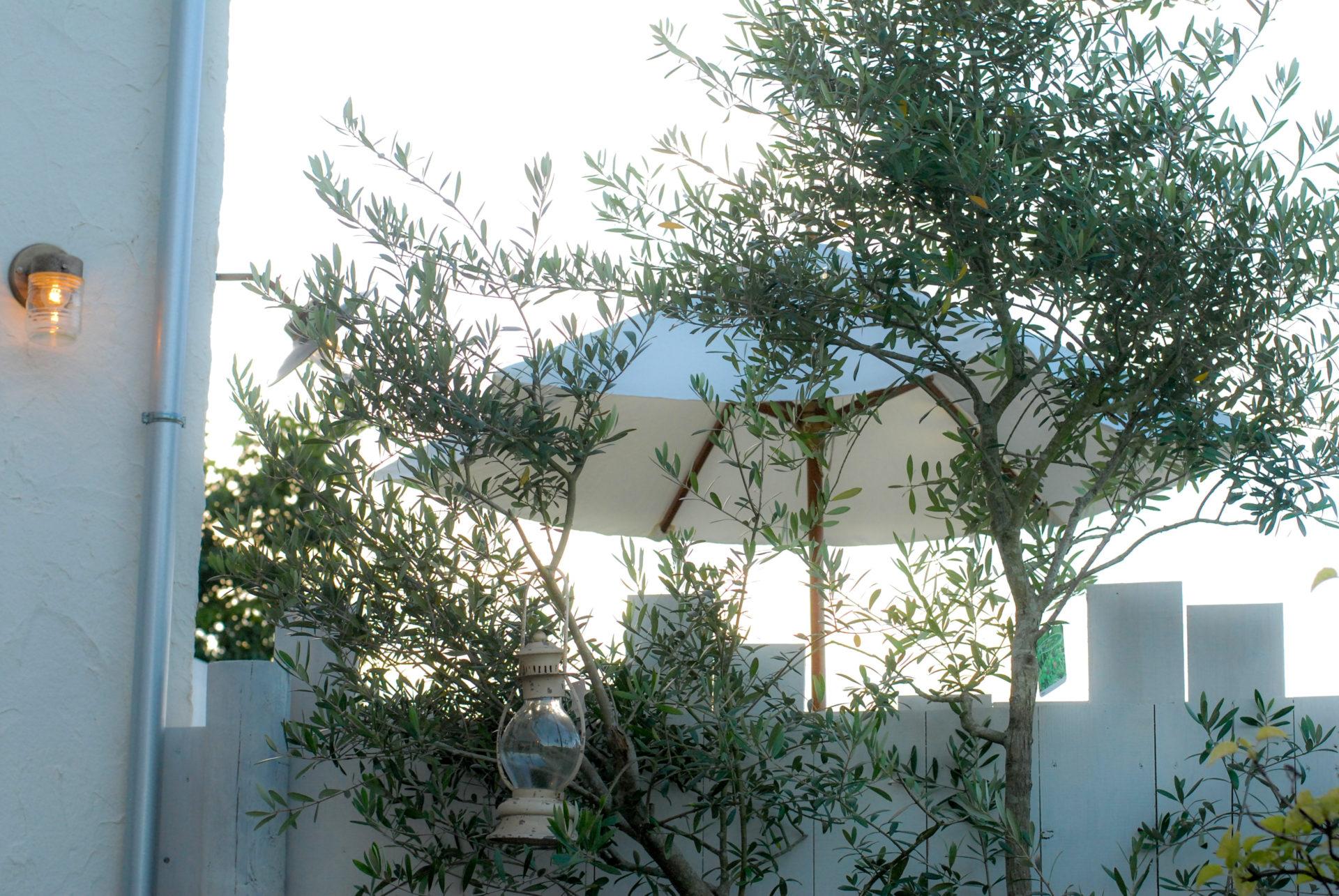 新アトリエ中庭